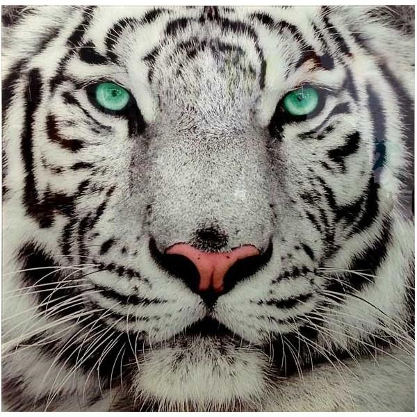 tableau en verre le tigre blanc. Black Bedroom Furniture Sets. Home Design Ideas