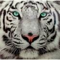 Impression Verre : Le Tigre Blanc