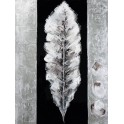 Silver feather 4