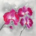 Passion Phalaenopsis